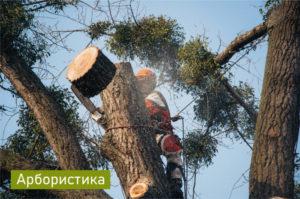 Спил аварийных деревьев Харьков
