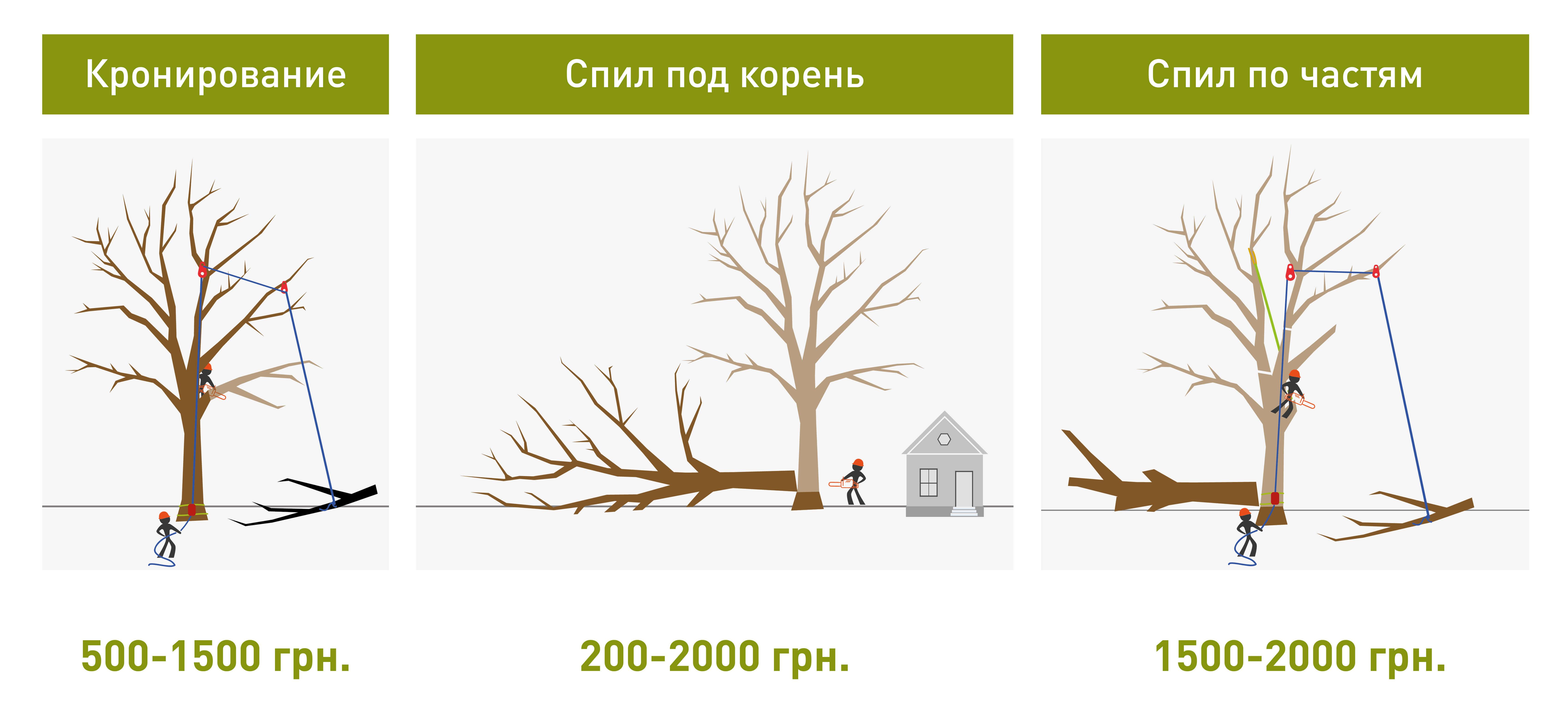 цена спила дерева