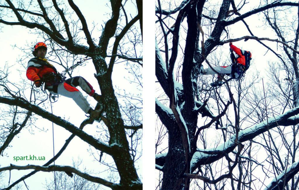 диагностика и обследование деревьев