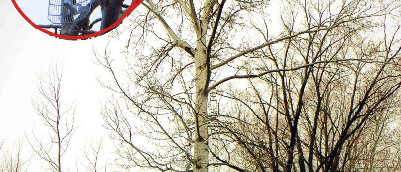Лестница из троса на дереве для доступа к Wi-Fi роутеру