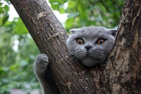 Снять кошку с дерева в Харькове
